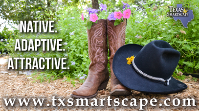 Texas SmartScape Graphic